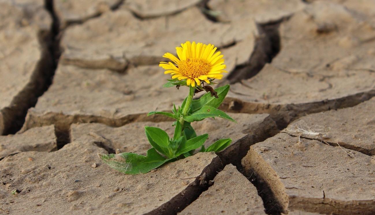 La souffrance: source d'espérance ou dépassement de soi? (1/4)
